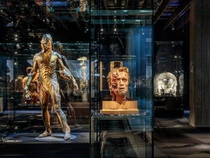 Una de las salas del nuevo Museo del Cine, en Los Ángeles. En primer plano, la cabeza del personaje de Arnold Schwarzenegger en 'Terminator' y a la izquierda, la criatura de 'La forma del agua'.
