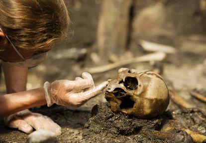 Un investigador analiza un cráneo en el yacimiento de Alken Enge (Dinamarca)