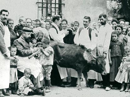 Inoculación de pus de vaca en el Hospital de Niños Pobres de Barcelona, hacia 1890.