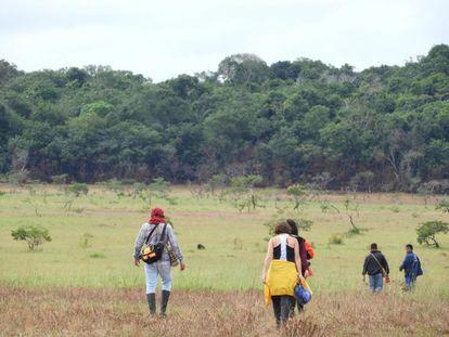 La selva que se ve al fondo creció sobre un cráter de meteorito que cayó en el departamento del Vichada, al oriente de Colombia.