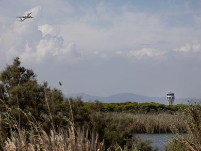 Un avión pasa sobre La Ricarda, una zona protegida cerca del aeropuerto del Prat de Barcelona, este jueves.