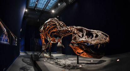 Tyrannosaurus Rex en el Museo Nacional de Historia Natural
