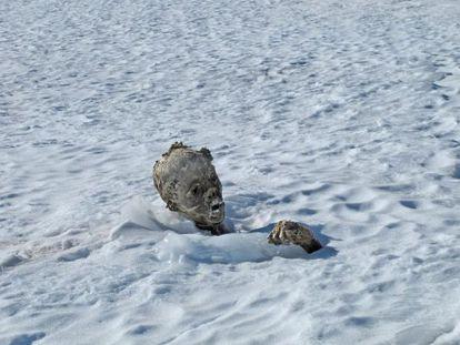 Imagen de la primera momia hallada en el Orizaba