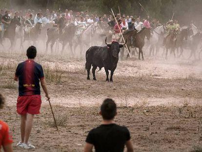 El 'Toro de la Vega', uno de los festejos que recorre 'Santa Fiesta'.