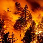 Monrovia (United States), 12/09/2020.- The Bobcat Fire progresses in the woods in the Angeles National Forest north of Monrovia, North East of Los Angeles, California, USA, 11 September 2020 (issued 12 September 2020). According to reports, the Creek Fire has burnt over 26,000 acres of forest. (Incendio, Estados Unidos) EFE/EPA/ETIENNE LAURENT