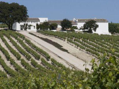Un viñedo de la localidad de Jerez.