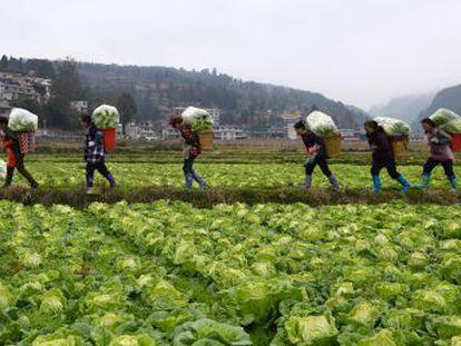 Una comisión internacional de científicos urge a un cambio en la alimentación y la agricultura para evitar 11 millones de muertes prematuras y sortear la catástrofe ambiental