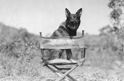 El famoso perro Rin Tin Tin, en su silla de estrella de Hollywood.