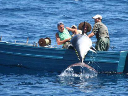 Tres pescadores capturan un atún rojo en el estrecho de Gibraltar