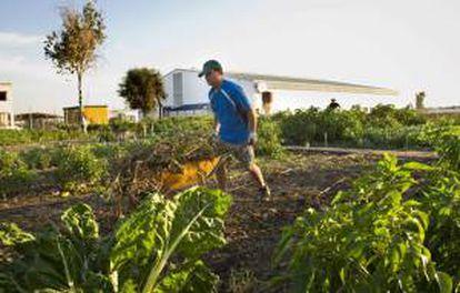 """Voluntarios de la ONG Madre Coraje trabajando en el """"Huerto Solidario"""" donde 35 personas, cultivan desinteresadamente unos huertos solidarios con los que, de momento, han recolectado cerca de 17.000 kilos de verduras y hortalizas que han entregado a entidades benéficas y comedores sociales."""