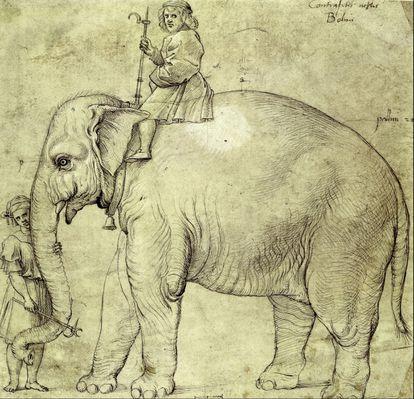 Dibujo de Hanno, el elefante del papa León X, que pintó Rafael en 1516.