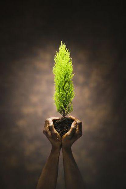La reforestación se alza como mecanismo para compensar emisiones.