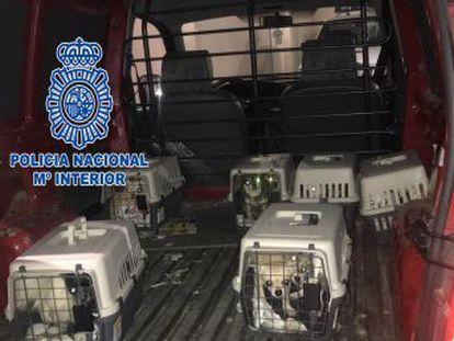 La policía ha desmantelado el centro de cría de perros, ubicado en una vivienda, que mantenía a los animales encerrados