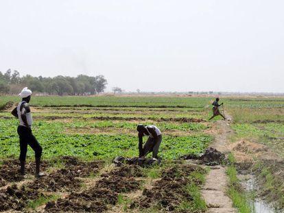Dos agricultores cuidan de sus campos en las afueras de Yamena (Chad).