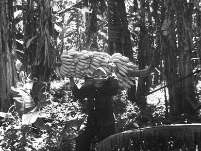 Un bracero de la United Fruit cargando plátanos.