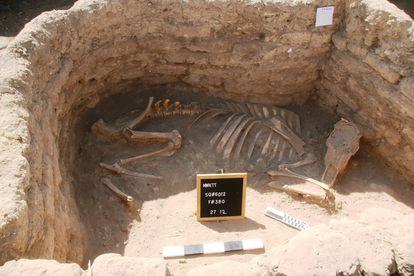 Huesos y restos de la ciudad hallada bajo la arena, al sur de Egipto, este jueves. Imágenes facilitadas por el Ministerio de Turismo y Antigüedades de Egipto.