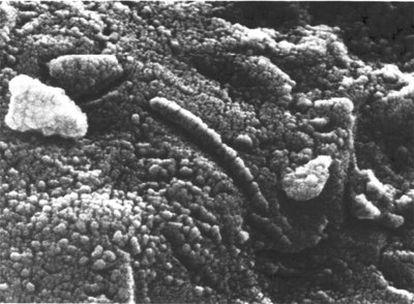 Detalle de las estructuras del meteorito ALH84001, proveniente de Marte encontrado en la Antártida.