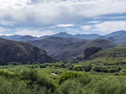 Sierra Madre Occidental en Sonora (México), agosto de 2019