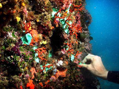 Coral rojo en las islas Medas.