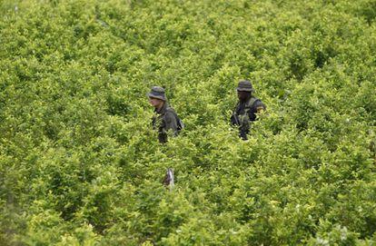 Policías patrullan un cultivo de coca en el sur de Colombia.