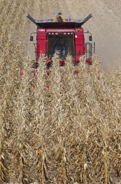 Una cosechadora en un campo de maíz.