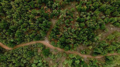 Vista aérea de un bosque en Prilep (Macedonia).