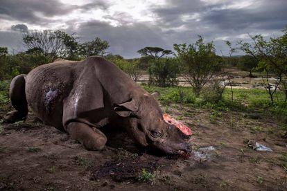 Foto ganadora del Wildlife Photographer of the Year 2017