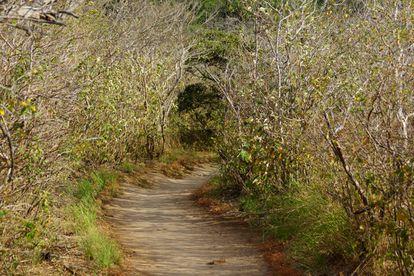 Un sendero en el Parque Nacional Rincón de la Vieja en Costa Rica.