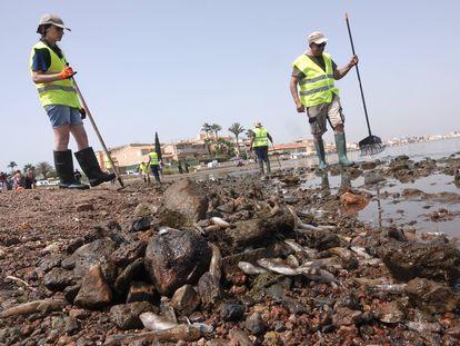 Peces y camarones muertos, este lunes en el mar Menor.
