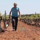09-05-19. (DVD 948). Ayudas de la Union Europea a la agricultura en España. En la imagen, un agricultor trabaja en un viñedo en Villanueva de los Infantes. ©Jaime Villanueva