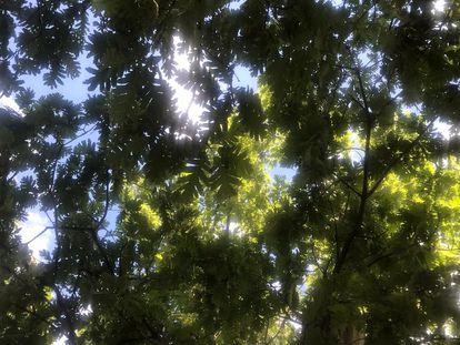 Vistas al cielo desde la sombra de un árbol.