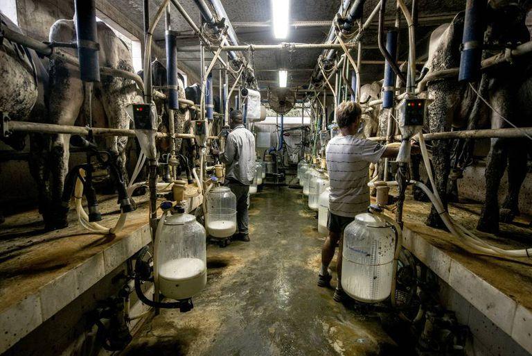 Ala de ordeño de una granja de producción de leche ecológica en Girona.