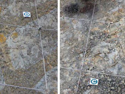 Zona con huevos de dinosaurio antes y después del ataque.