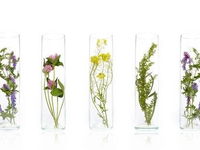 Producen dermatitis, pero estas fragancias comunes en perfumes, cremas y productos de limpieza no siempre figuran en la etiqueta