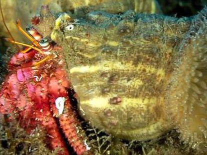 El documental  Criaturas olvidadas  recibe la Barandilla de bronce dentro de la categoría de documentales de hasta 30 minutos en el Ciclo Internacional de Cine Submarino de San Sebastián