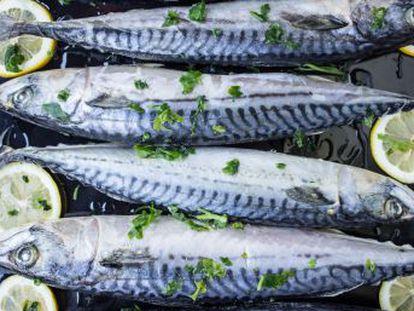 Eliminar microbios con el lavavajillas o comer según qué pescado azul no le está beneficiando, sino todo lo contrario