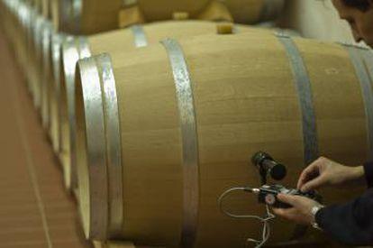 Un trabajador de Pago de Carraovejas comprueba el estado del vino dentro de la barrica.