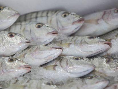 Pescado para subasta en Fiumicino (Italia).