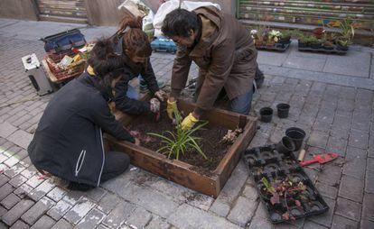 Los vecinos plantan en los alcorques de los árboles en la calle La Palma.