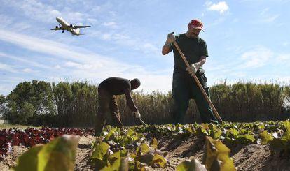 Dos trabajadores de Cuina Justa en el huerto que les ha cedido el Ayuntamiento de El Prat.