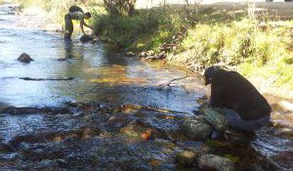 Tareas de seguimiento y detección de ejemplares en el río.
