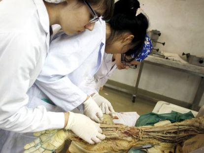 Estudiantes de Medicina en la sala de disección.
