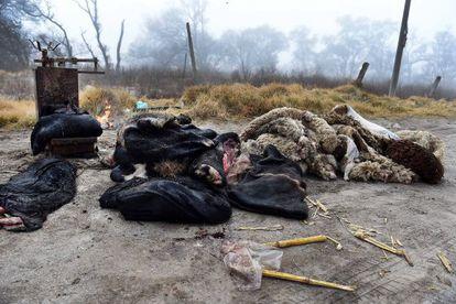 Pieles y restos de animales arrojados en una cuneta.