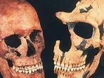 Uno de los cráneos cromañones de la cueva de Paglicci (izquierda) junto a un fósil neandertal.