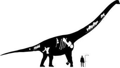 Recreación del dinosaurio con los fragmentos encontrados y la comparación de tamaño con Clint Eastwood