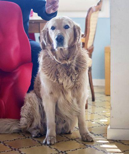 'Shiwa', el perro del músico.