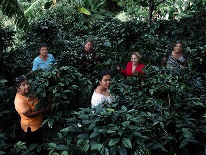 Mujeres de la Asociación Agropecuaria Café Femenino Gigante