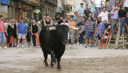 Festejo taurino en Borriana (Castellón)