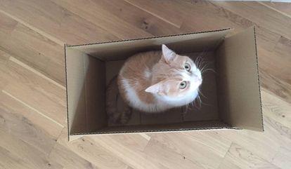 Las cajas, una moda estructural.