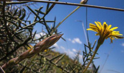 Espárragos y naturaleza fugaz de primavera.